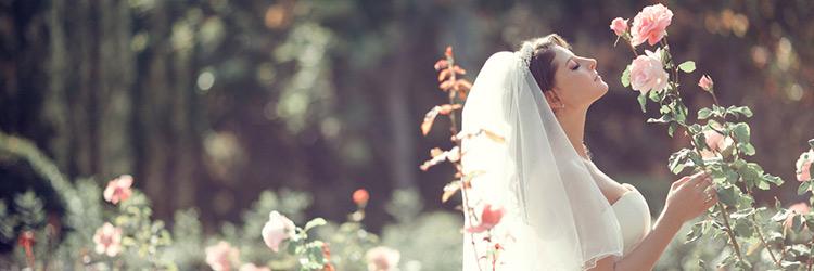 花嫁 薔薇